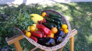 Panier legume